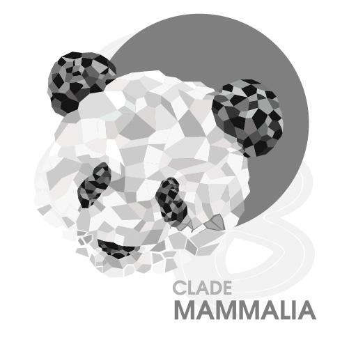 Clade Mammalia