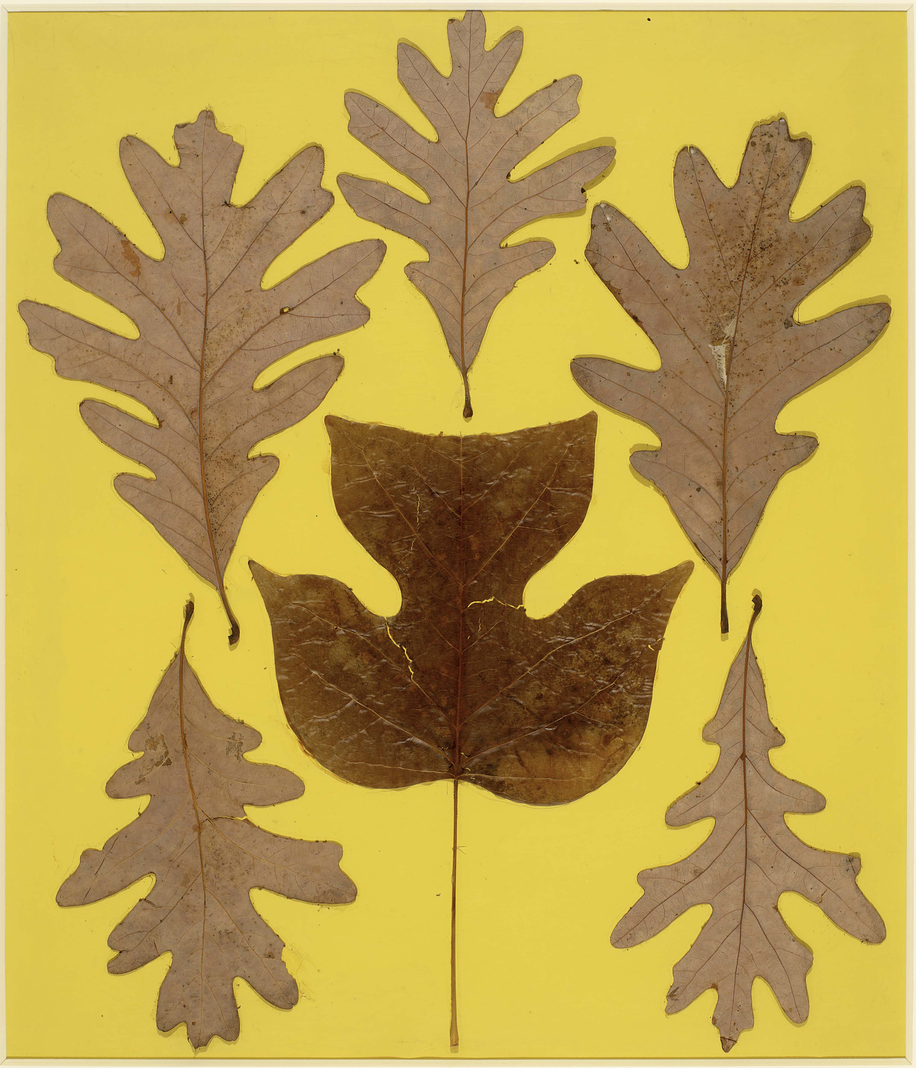 sneak peek leap before you look black mountain college  josef albers leaf study ix c 1940 leaves on paper 28 x 24 frac34 inches c the josef and anni albers foundation artists rights society new york