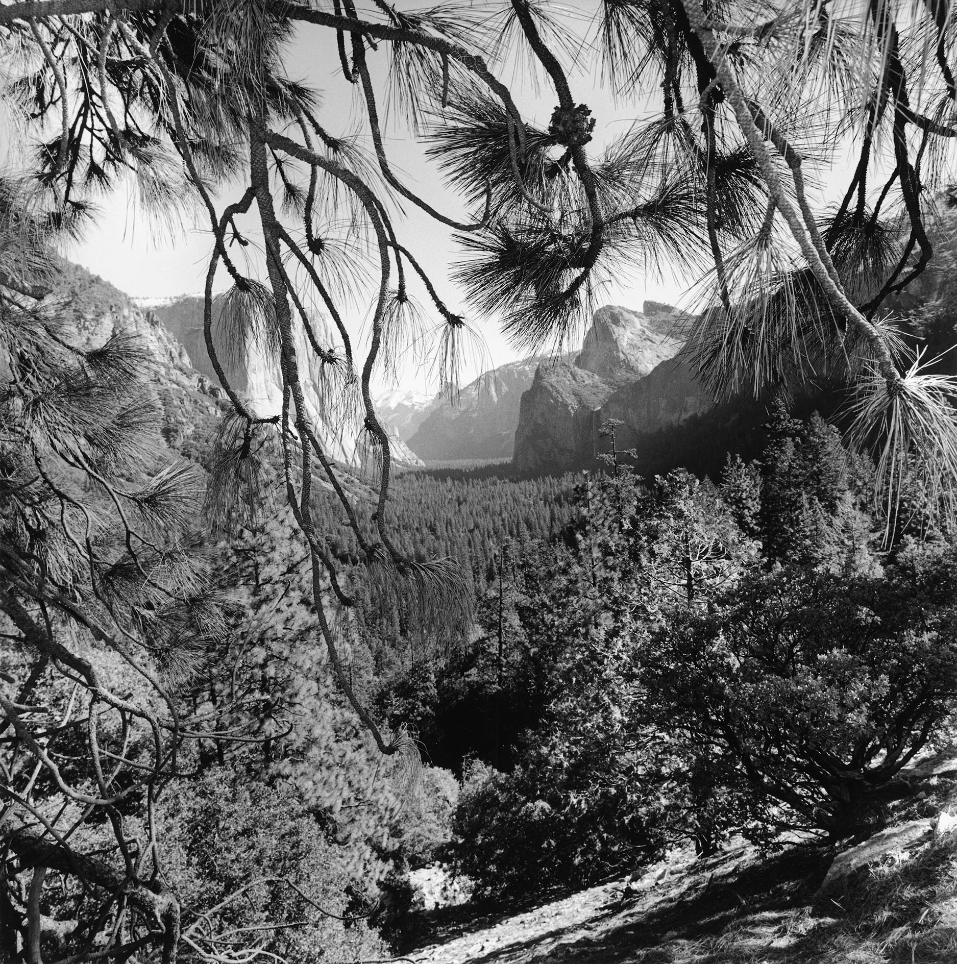 Yosemite National Park, California, 2004. Gelatin silver print. © Lee Friedlander, Courtesy Fraenkel Gallery, San Francisco