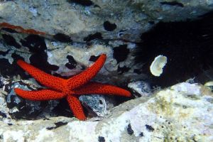 Echinoderm, sea star and echinoderm, sea urchin