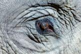 artborghi-young elephant