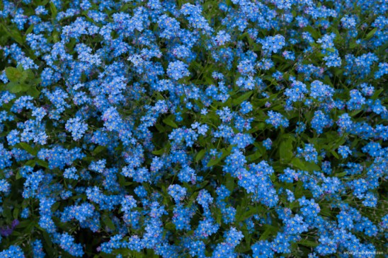 artborghi - forget me not small