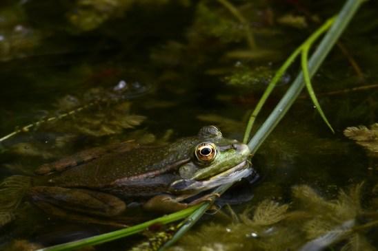artborghi-frogs-2