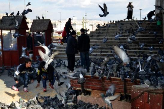 bosporus-birds-artborghi-5