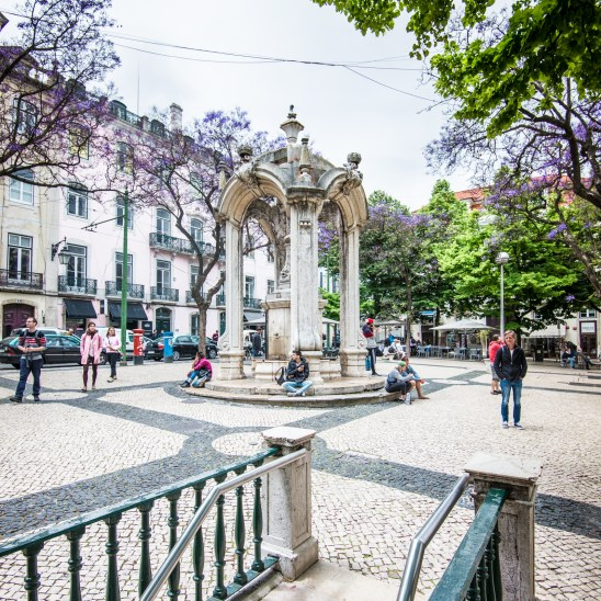 Blooming Jacaranda trees, Lisbon
