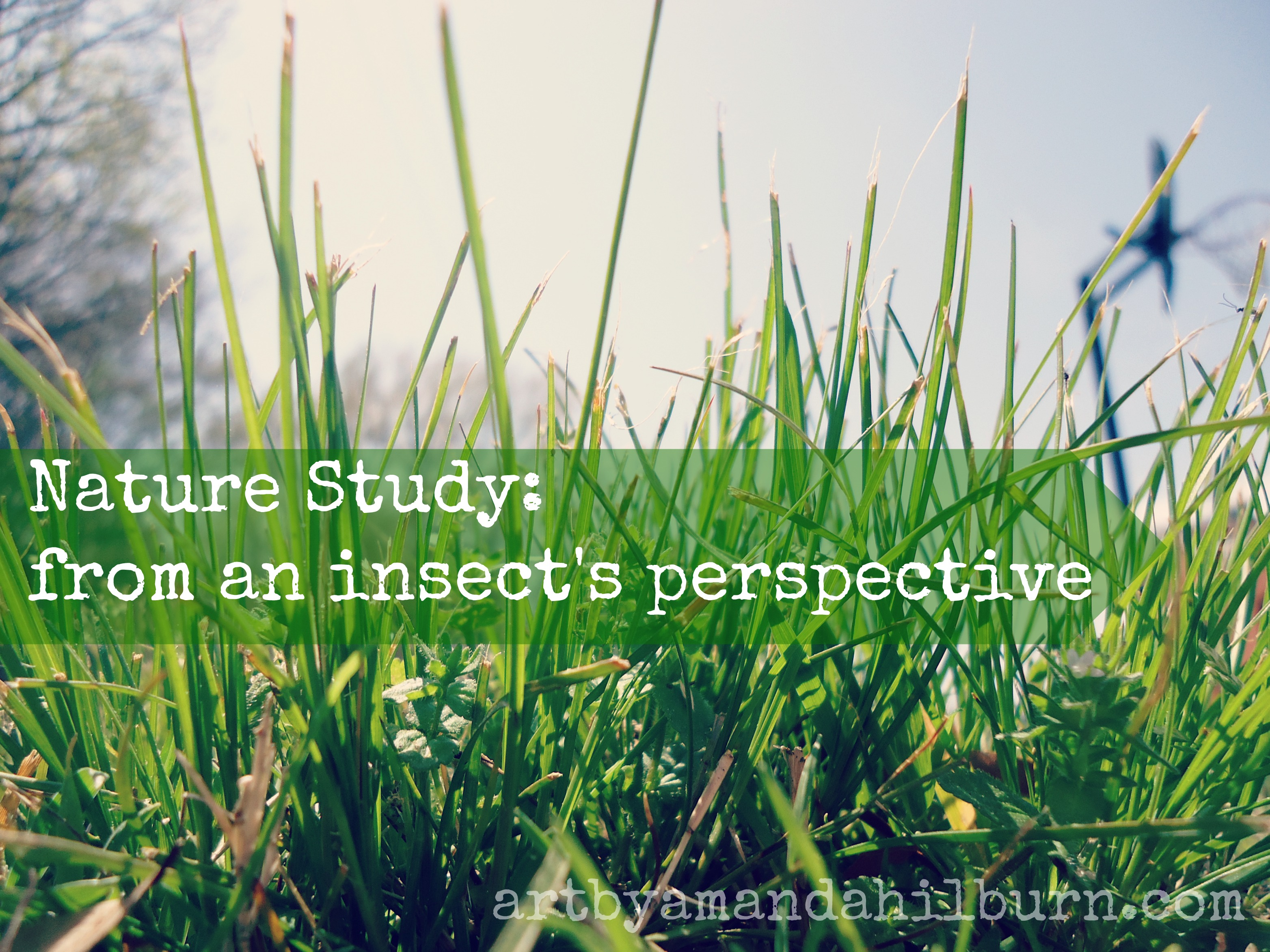 Nature Study: from an insect's perspective