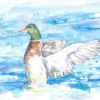 duck-flapping-watercolour