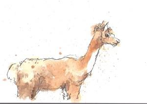 201408 Animal adv lama