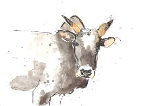 201408 animal adv cow