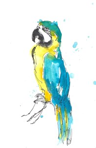 201408 animal adv macaw