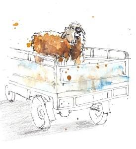 Sheep at the Berber market