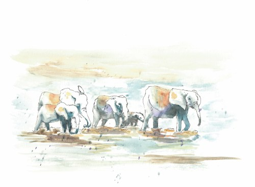 elephants - river crossing