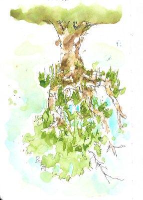 Tree in Parnell Gardens