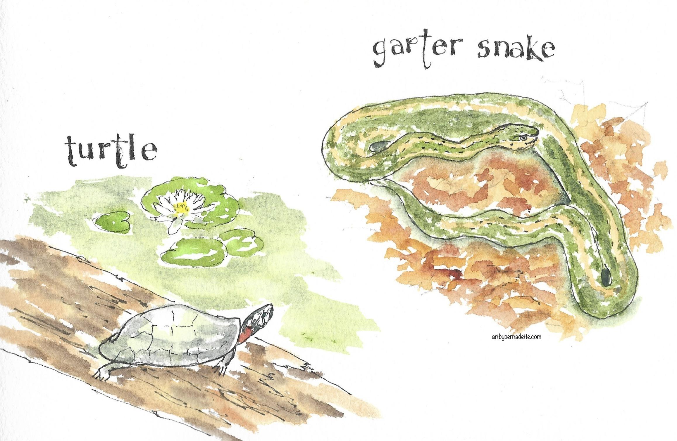 Turtle and garter snake