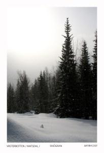 Photo Art Print Card - Snögran