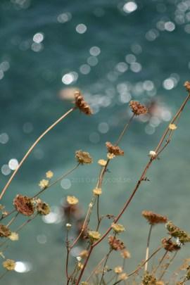 Spain / Calella Palafrugell - Sun Glistening