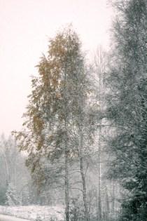 High Coast/ Köpmanholmen / Holmenrakan - October Snow