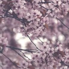 cjosefsson_artbycost_photoart_blossom_20210524_DSC_0191_ps_watermark_wp