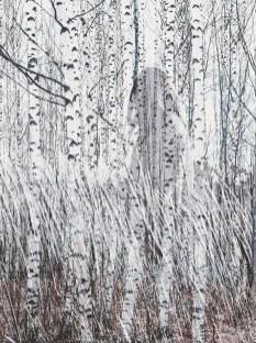 cjosefsson_artbycost_photoart_oseries_invisible_otydlig_birches.DSC_0431_wp