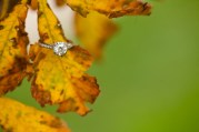 fall-leaf-engagement-ring-photo-katelyn-james-photography