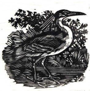 Bob Simola night-heron-after-bewick