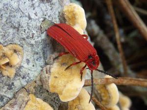 Phil Colaprete, Net Winged Beetle