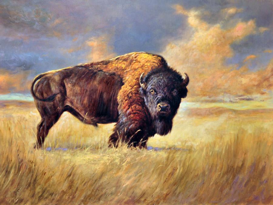 modern-buffalo