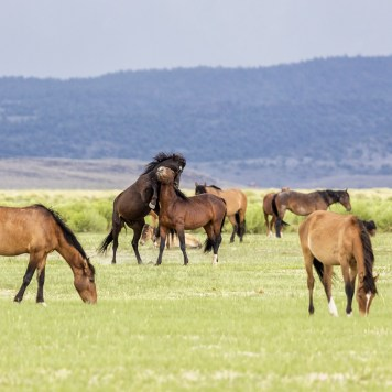 Dave Coronel - Mustangs