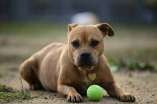 """Image result for second chance at love humane society"""""""