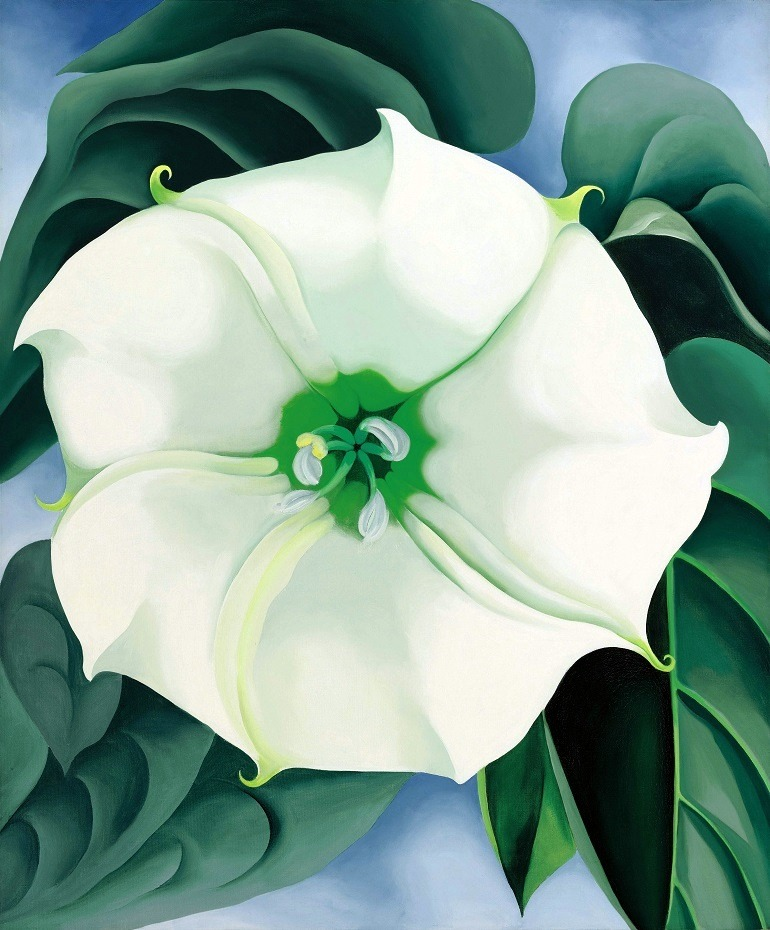 Image: Jimson Weed  by Georgia O'Keeffe is the image of a white beautiful flower by one of America's famous artist set the path for female artists