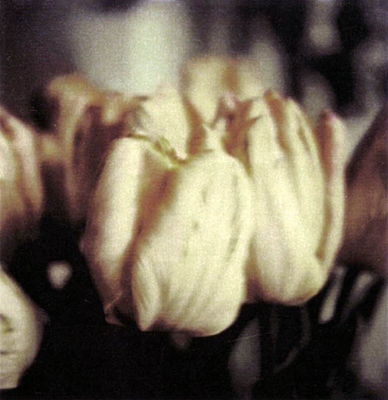Image: Photograph of Tulips by Cy Twombly on display in Spain for the very first time
