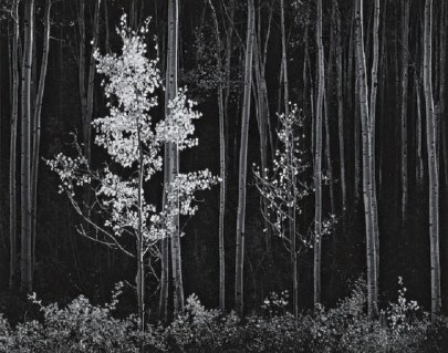Image: ASPENS, Northern New Mexico by Ansel Adams was one of the images sold at Bonhams Auction