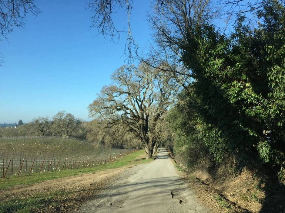 150122 11 California champagne Iron Horse road IMG_3449