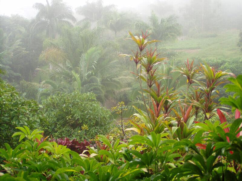 visiting Hawaii