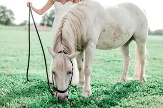 Healthy happy horse