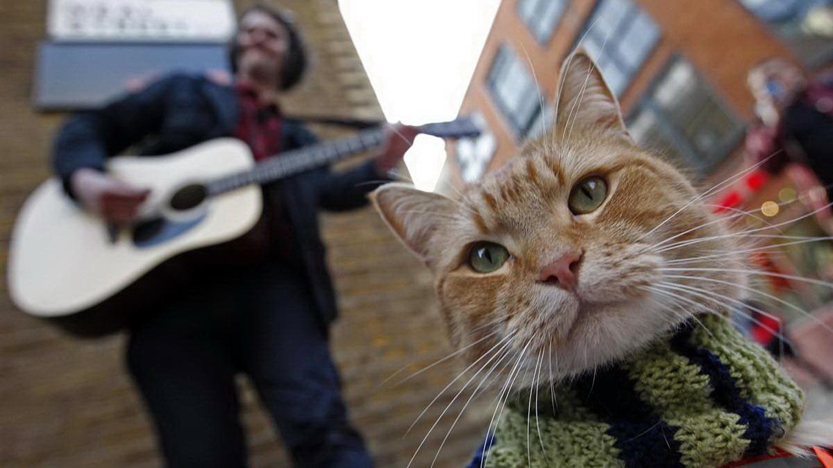 Как человек и кот обрели надежду на улицах Лондона
