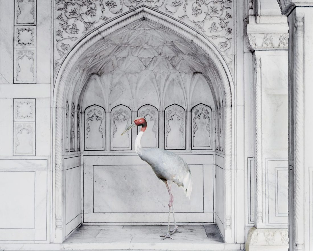Karen Knorr Photography