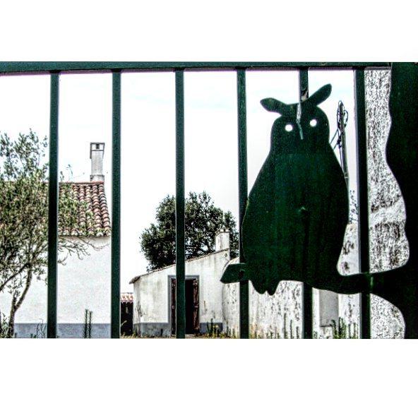 #mocho #owl #tapadademafra #portao #gate