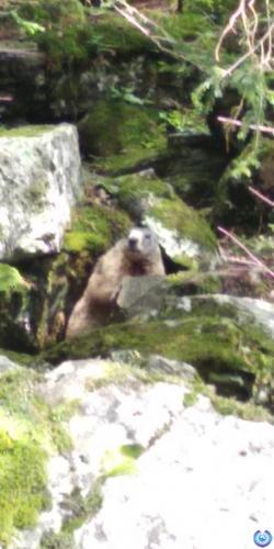 Parco delle marmotte - Chiareggio (Valmalenco)