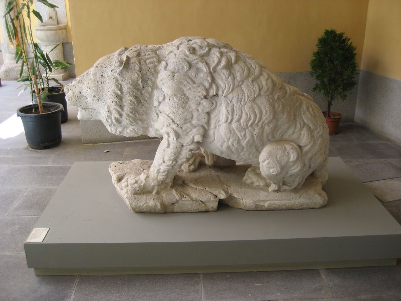 El oso que estuvo en la Cibeles hasta