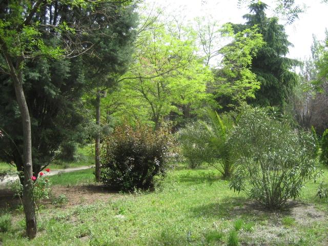 Interior del jardín