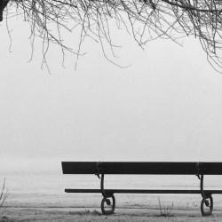 Cenizas en el parque
