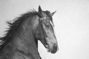 paul-cadden-horse1