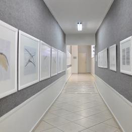 Exposição de Petrillo