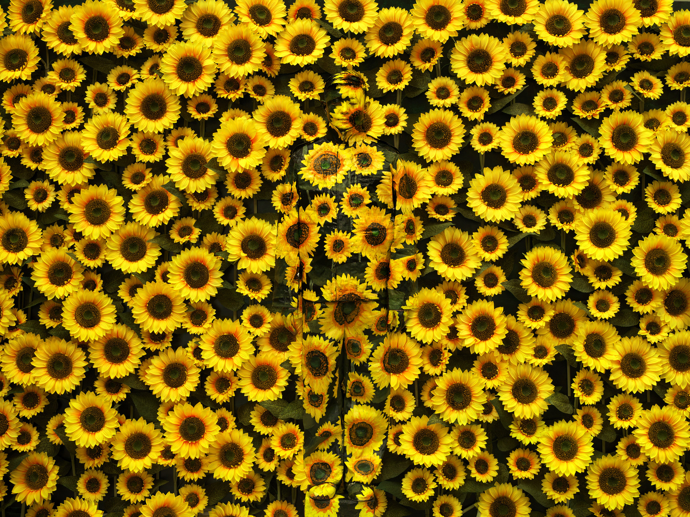 Hiding in the City - Sunflower No.1