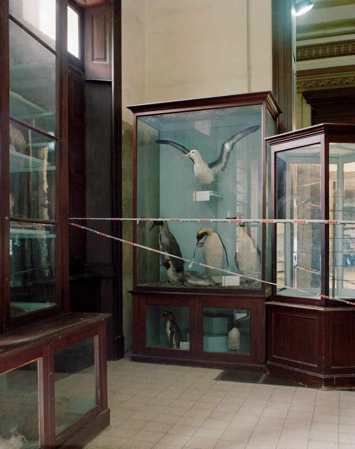 Nicolas Savary_Albatros_Musee des Sciences naturelles_La Plata_2014 © Nicolas Savary