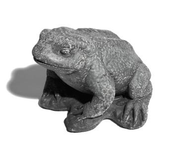 roundbush_frog