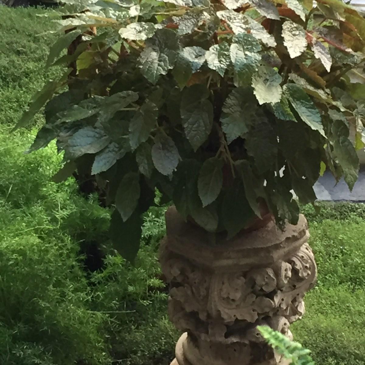courtyard-begonia-isabella-stewart-gardner