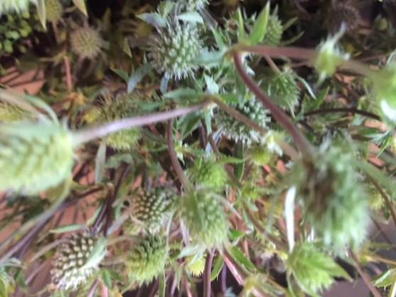 floral-in-the-shop-artefacthome-june-2