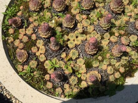 snugharbor-succulents-11